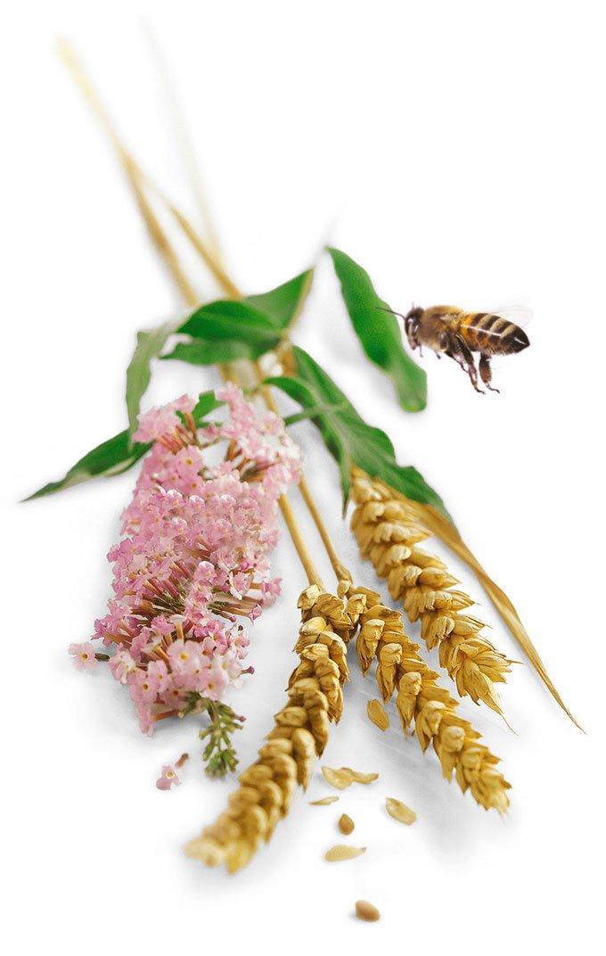 Pollen syrup